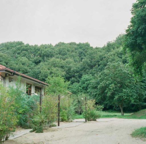 森の8カテン