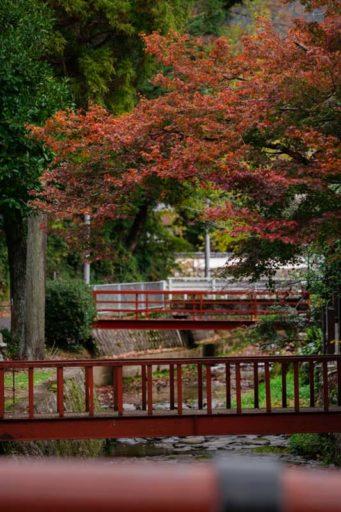 丹波の紅葉と赤い橋