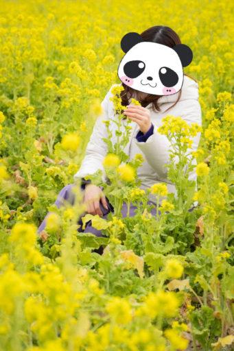 菜の花とぷーさん