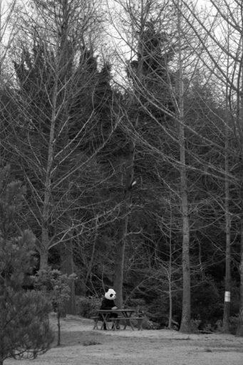 林とぱんだり