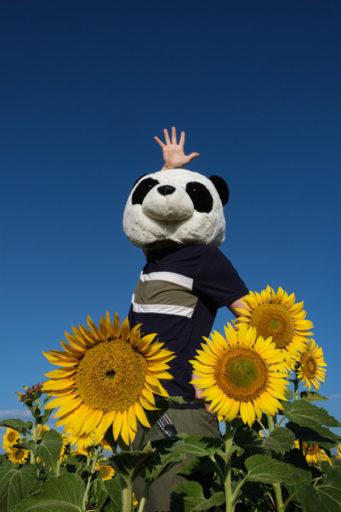 ぱんだりの太陽の花