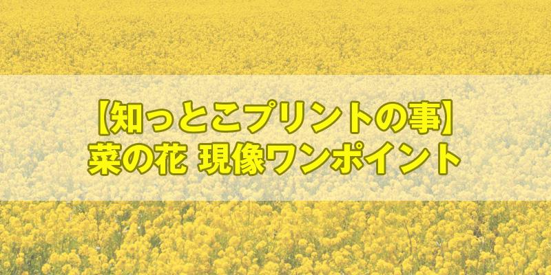 菜の花の現像